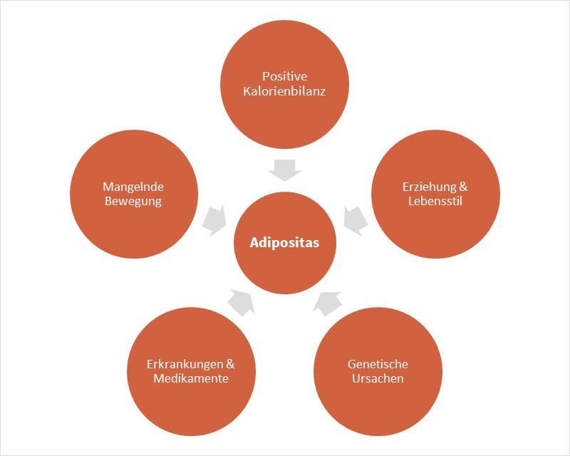 Ursachen für Adipositas (Fettleibigkeit)