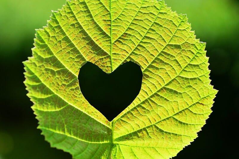Grünes Blatt mit ausgeschnittenem Herz in der Mitte