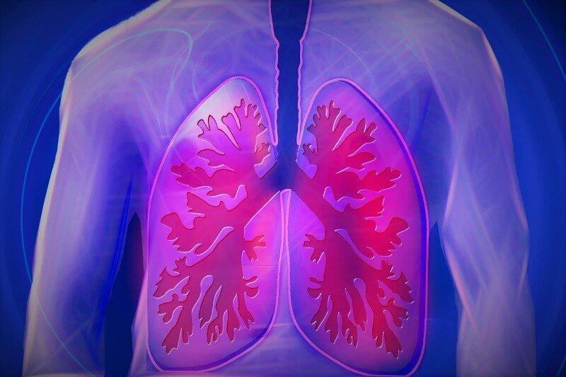 Grafische Darstellung der Lunge.